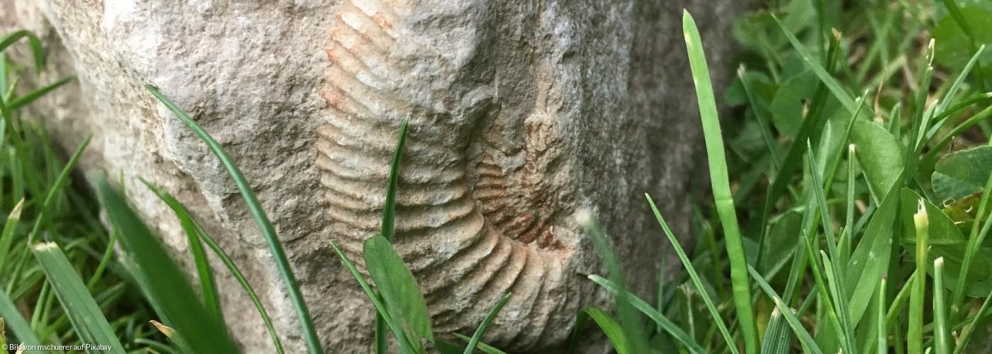 Stein mit Fossilien